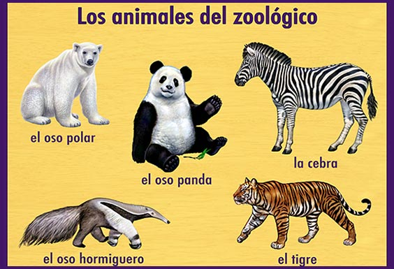 ABCmouse Zoo learning activity in Spanish